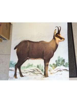 Lovska tarča - Gams