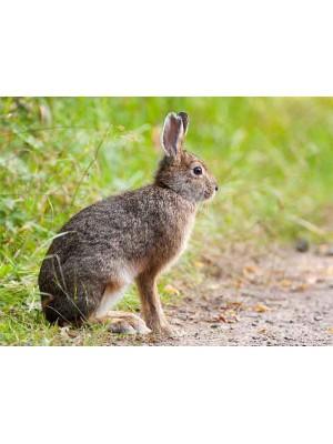 Repelent za odganjanje zajcev in kuncev (koncentrat z dvojnim delovanjem)
