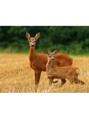 Repelent za odganjanje srnjadi in jelenjadi (koncentrat z dvojnim delovanjem)
